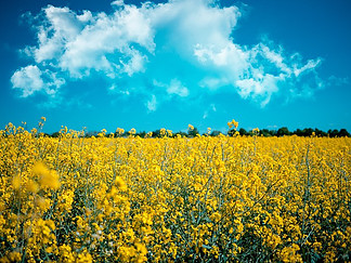 What are Biofuels? Are they sustainable?